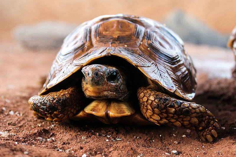 Tortoise. why does decluttering and organising take so long?