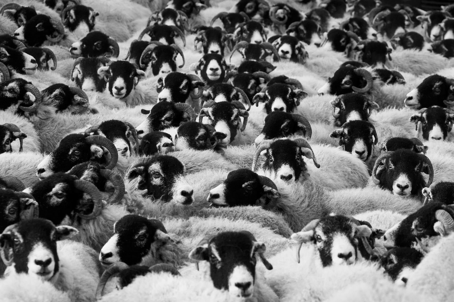 Sheep: what if the Organizing Fairy paid a visit?